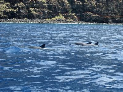 Kayaking with dolphins in Kealakekua Bay
