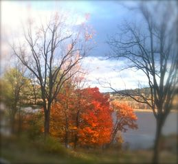 Catskill cabin photo - fall from the cabin
