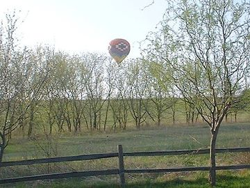 At Harvest Home in the Summer - Hot Air Balloons.