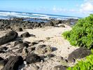 Haleiwa House Rental Picture