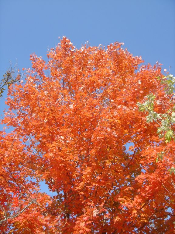 An Example of Our Glorious Fall Foliage!