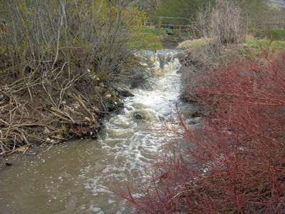 West Sopris Creek Runs through the property.