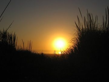 Guest shot of sunset picture taken through the beach grass.