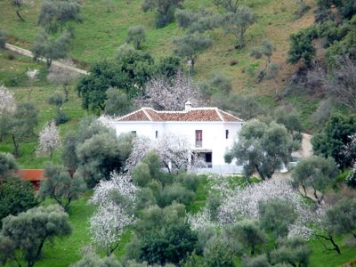 Gaucin house rental - Rosa Alta in January almond blossoms