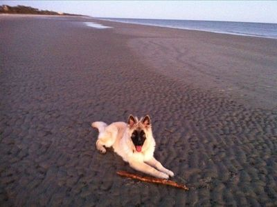 My puppy waiting for me to throw stick to play fetch on beach:-)