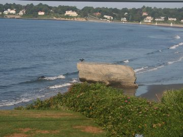 Newport house rental - The big rock on Npt beach in front of compound fun to climb and take pictures on
