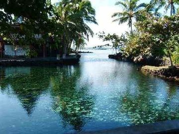 Champagne Pond is Only 1 Block Away. Swim the Honu (turtles). YES!