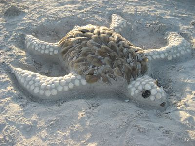 Have Fun Crafting a Loggerhead Sea Turtle in the Sand!