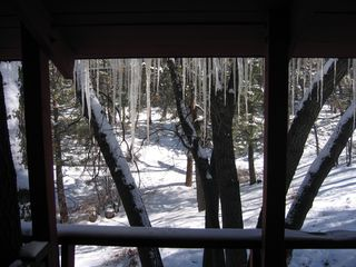 Moonridge cabin photo - More Views of the Forest