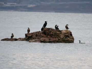 Cormorants just offshore