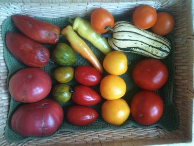 A selection of our organic produce