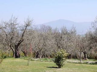 Cortona villa photo - La Colonica Morning in the olive grove ... Thanks to Jackie