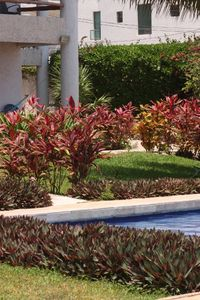 Puerto Morelos condo rental - pool side