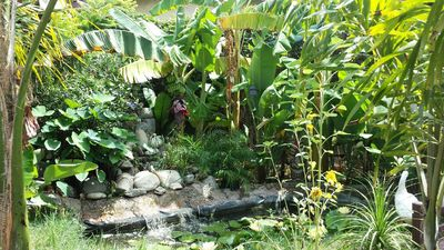 Tiki Tropical garden falls and many species of banana trees, palms and hibicous