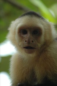 20. Look for monkeys in the rainforest near the condos