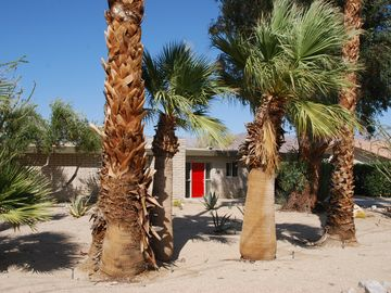 Borrego Springs house rental - Mid-Century bungalow on a Palm-filled half-acre corner lot.