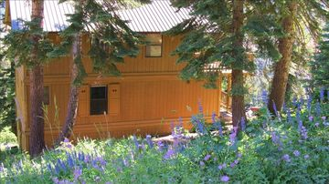 Tamarack house rental - Spring Wildflowers in Summer, wildflower hikes right out the front door