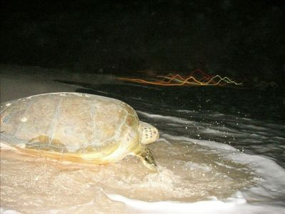 Playa del Secreto is known for our turtle nesting activity, May to October