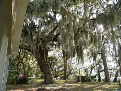 Yard is shaded by huge live oaks with moss draped limbs,