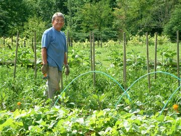 Jean-Francois, king of our kitchen garden