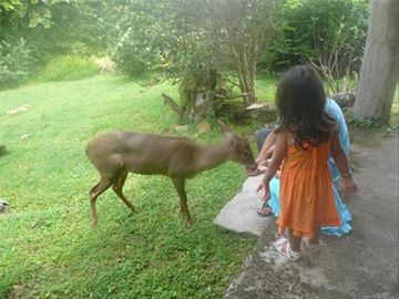 Contadora Villas - children petting deer