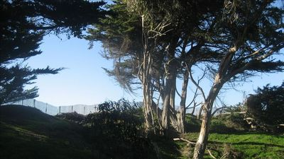 Cypress Grove back deck views; pathway through the trees, with dune & sea views.