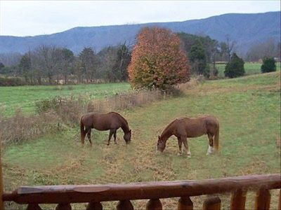 Horses grazing just out front of the cabin, does it get better than this?