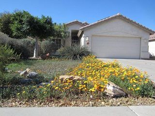 African daisies bloom in the spring. - Phoenix house vacation rental photo