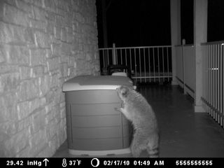 Austin house photo - NOSEY RACCOON