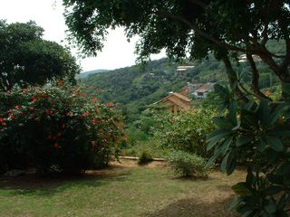 Ferradurinha villa photo - nice,quiet garden with lots of plants and flowers