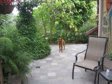 my dog Oso in backyard of the Casita