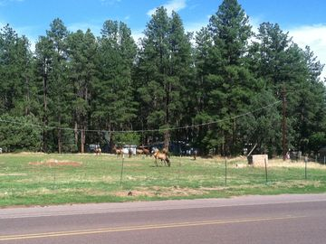 Elk graze across from the local grocery store and sometimes walk up the street.