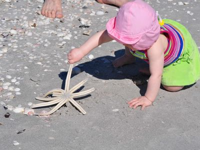 Sanibel is famous for being one of the best shelling beaches in the world