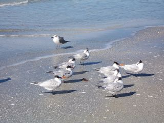 Redington Shores condo photo - shore birds