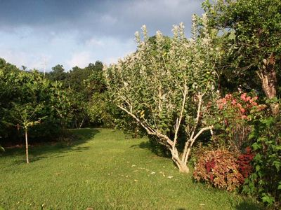 Citrus Orchard and Kitchen Gardens