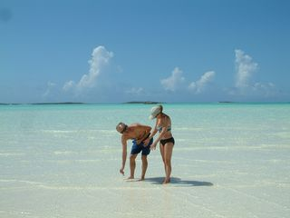 Great Exuma villa photo - Jolly Hall friends - Sand-dollaring at CocoPlum beach - Ask us how to get there!