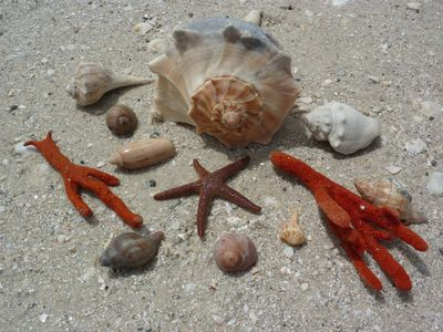 Shelling is incredible at Bonita Beach! Start a collection of your own!