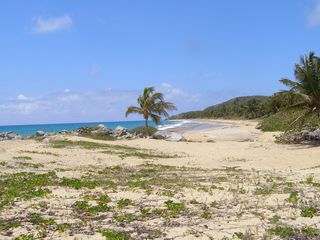 Vieques Island house photo - The wild deserted beaches of Playa Grande
