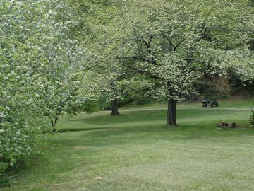 another view of the front yard with all the flowering trees