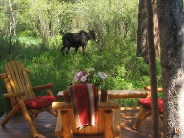 Our resident moose with an afternoon visit off of back deck with log furniture.