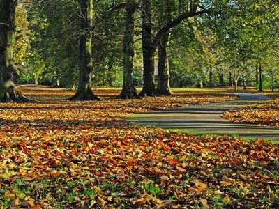 Bute Park - in the autumn