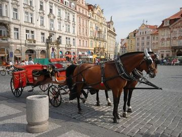 Old Town square horse carriage