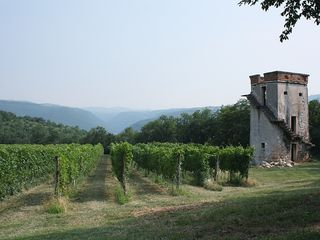 Verona City house photo - our vineyard to the north
