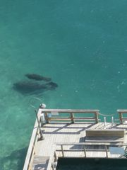 West Palm Beach condo photo - Manatees and fishing pier from balcony