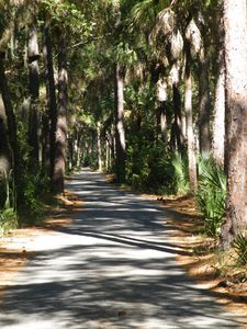 Road through Hunting Island State Park - used in many movies for jungle scenes