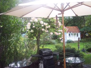 Minnetonka house photo - Patio umbrella, grill and back yard