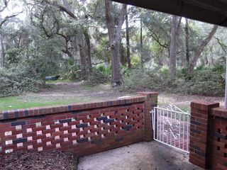 Jekyll Island house photo - Looking out from back patio into live oak/pine forest.
