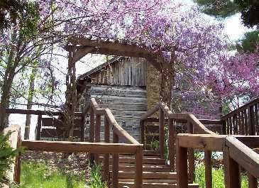 Nashville house rental - The wisteria in bloom on our property.