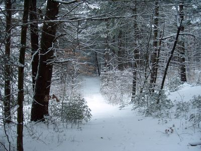 Winter path from the house