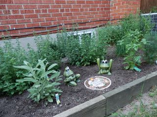 Toronto house photo - Herb Garden